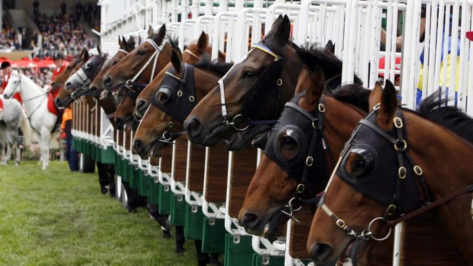 Race horses lined up at the start gates, waiting to win their race